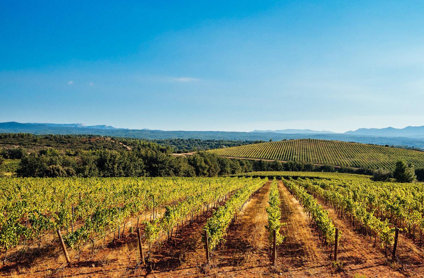 Domaine viticole et champs de vigne